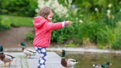 girl- feeds-ducks