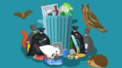 Animation showing animals surrounding litter