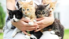 Kittens sitting on a woman's lap