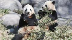 The giant pandas were at Toronto Zoo before they went to Calgary Zoo