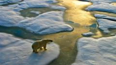 Polar bear walking over ice sheets.