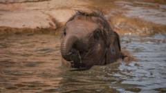Young-elephant-playing-in-the-water.