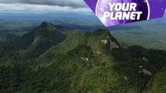 Rainforest and Your Planet logo