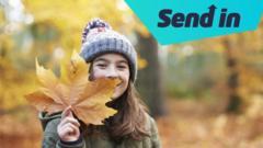 autumn leaves solicit