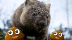 A wombat with poo emojis