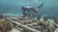 Victor-scuba-diving-to-tend-to-coral-nursery