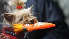 What's your dog's fave toy?