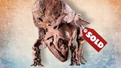 Big John, the world's largest triceratops sold.