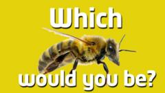 Bee quiz index image