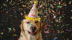 Golden-retriever-wearing-party-hat-surrounded-by-ticker-tape.