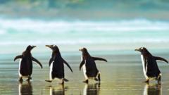 four-gentoo-penguins