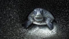 Turtle by Aimee Jan