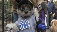 Dog dressed as Mets fan