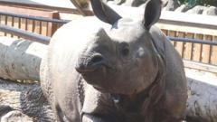 Qabid the rhino