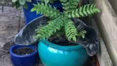 A seal in a plant pot.