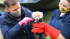 red-panda-with-zookeepers.