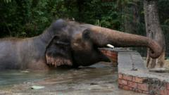 kaavan-the-elephant.