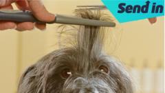 dog-being-cut