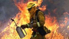 A Cal Fire fire fighter uses a drip torch to burn dry grass during a backfire operation to head off the Rocky Fire (03 August 2015)
