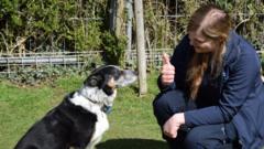 peggy-the-deaf-sheep-dog