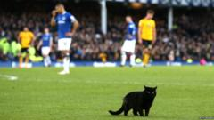 Cat on pitch at Goodison Park