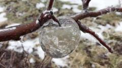 Ghost apples' appear in icy Michigan orchard