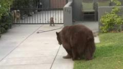 Bear and dogs