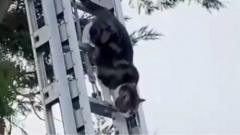Cat climbing down ladder