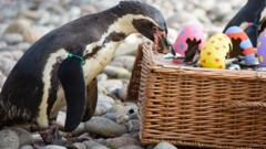 Penguin takes a fish from a decorated Easter basket