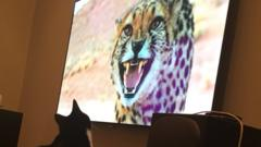 Cat watches a cat