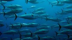 tuna-fish.