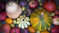 Harvested vegetables.