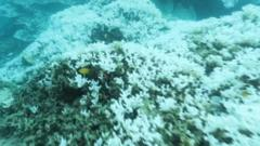 Japan's Coral Reefs are dying