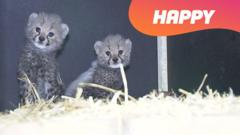 Two Panther Cubs and the word happy.