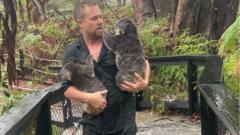 park-keeper-rescues-koalas-from-flood-australia.