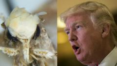 Trump and Moth