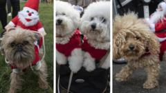 dogs-in-christmas-jumpers.