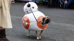 BB-8 pug