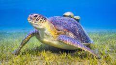 sea-turtle.