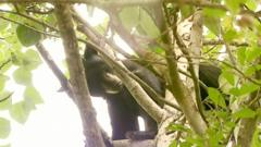 Black Bear closes an Alaskan zoo