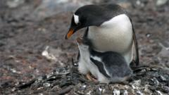 Penguins in the Antarctic