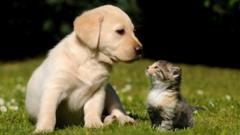 A puppy and kitten.
