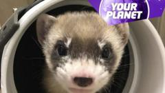 A picture of a ferret and the your planet logo