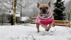A dog plays in the snow