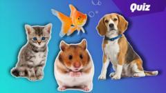 Pets Quiz.