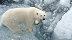 polar-bear.
