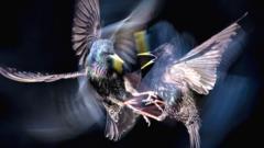 Flashdance - Adrian Clarke - Best Birdlife Photographer.