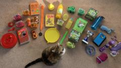 cat-sitting-with-toys-books-and-trophies