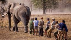 Prince Harry and team with an elephant
