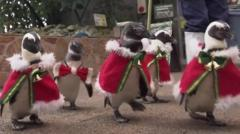 penguins dressed in santa suits